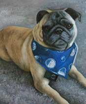 painted dog portraits